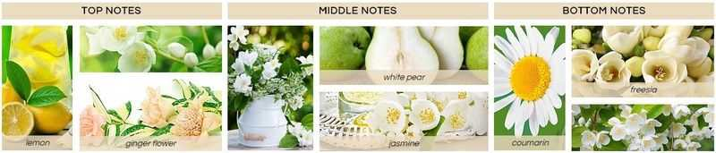 Fresia e gelsomino bianco